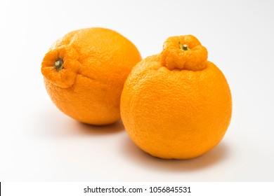 Japanese citrus Dekopon of Siranui, another name is sumo mandarin or sumo citrus.