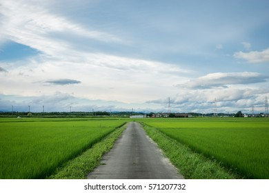 Japanese countryside rice field