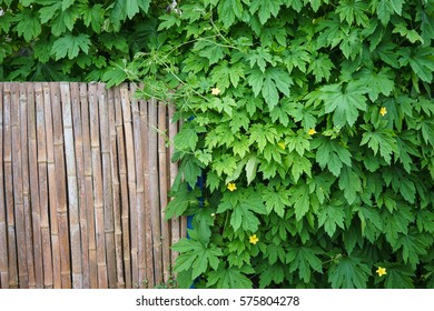 Japanese countryside wooden wall covered by green plant, Suazuka, Japan.