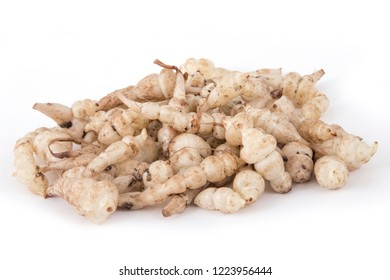 Japanese crosne Stachys affinis tubers rhizome root vegetable closeup