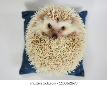 Japanese cushion for hedgehog.