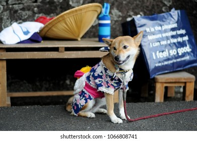Japanese Dog sleeping on the Street in Shizuoka, Japan. Sign says that Welcome! Her name is Princess, our mascot dog.
