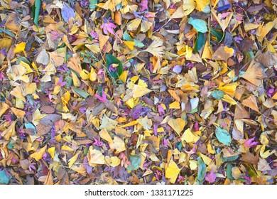 Japanese fallen leaf
