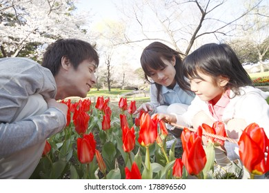 Japanese family looking at tulips