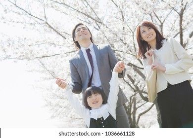Japanese family stand in the row of cherry trees
