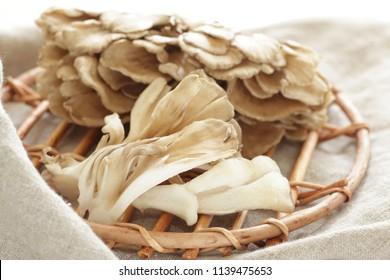 Japanese fungus Maitake mushroom for prepared food image