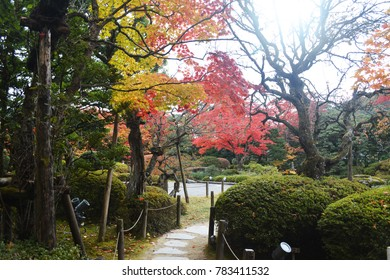 Japanese garden in autumn.