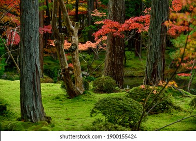 Japanese garden covered by moss with fall colors, Saiho-ji temple, Kyoto, Japan