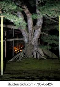 Japanese garden KANAZAWA night scene