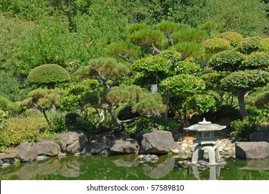 Japanese Garden Pond With Turtles