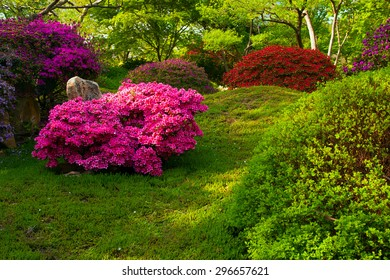 Japanese garden with purple bush in Prague botanic Garden, Troja