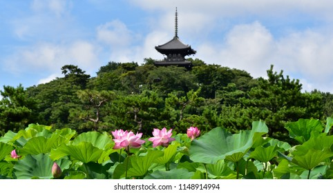 japanese garden in summar with lotus blooming, louts flower with pagoda background
