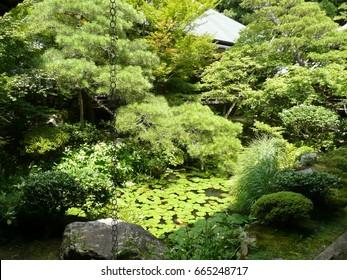 japanese garden in temple in kyoto