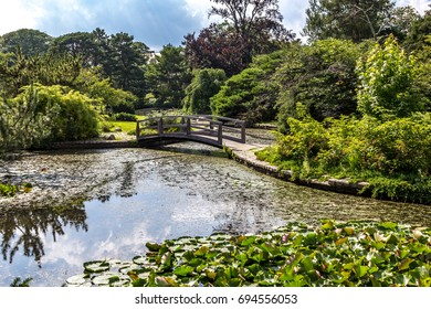 Japanese garden with trees, pond and bridge