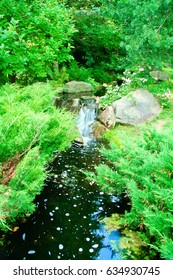Japanese garden with a waterfall and flowers with green leaves