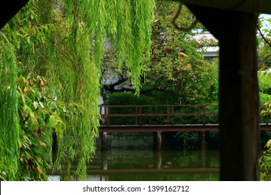 The Japanese garden of willow trees