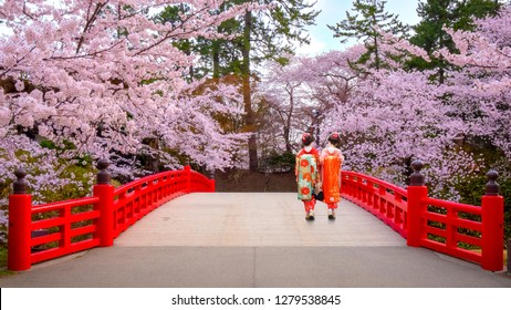 Japanese Geisha with Full bloom Sakura - Cherry Blossom  at Hirosaki park, in Japan