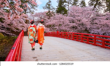Japanese geisha with Full bloom Sakura - Cherry Blossom  at Hirosaki park, Japan