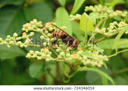 Bộ sưu tập côn trùng 2 - Page 16 Japanese-giant-hornet-vespa-mandarinia-450w-724346014