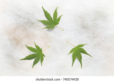 Japanese green maple leaf on traditional paper