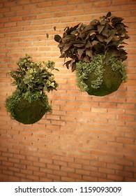 Japanese Hanging Gardens : Kokedama Hanging Moss Ball with brick wall