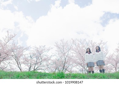 Japanese high school students Pointing a cherry tree in the back