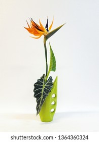 Japanese Ikebana in green vase with strelitzia flower and alocasia leaf