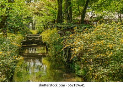 japanese landscape - matsuo taisha - kyoto