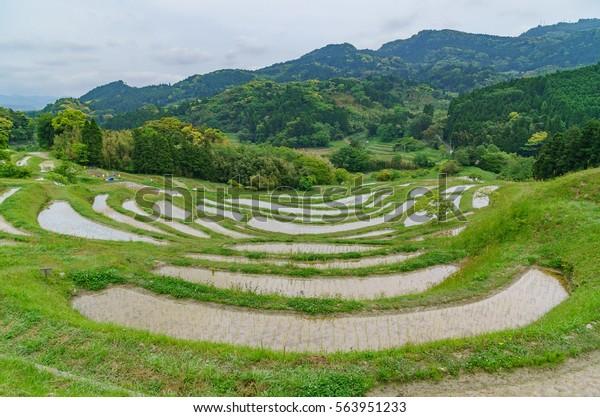 japanese landscape - oyama senmaida - kamogawa - chiba