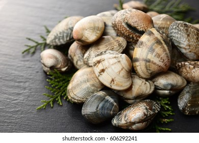 Japanese littleneck clam