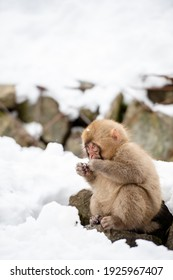 Japanese macaque and monkey family taking a bath in a hot spring in Nagano, Japan at winter