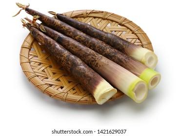 Japanese Madake Bamboo Shoots isolated on white background