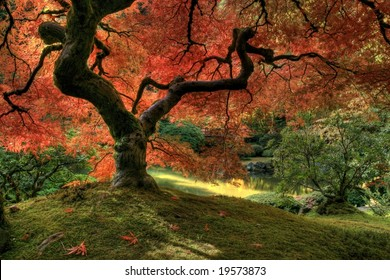 Japanese Maple inside view