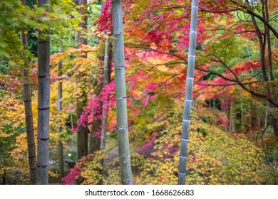 Japanese maple leaf and bamboo