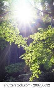 Japanese maple leaf in Kurama, Japan