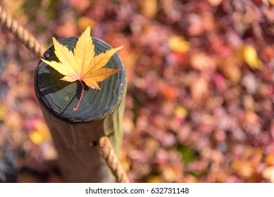 Japanese maple leaf on wood pattern backgroud in autumn season at Kyoto,Japan.