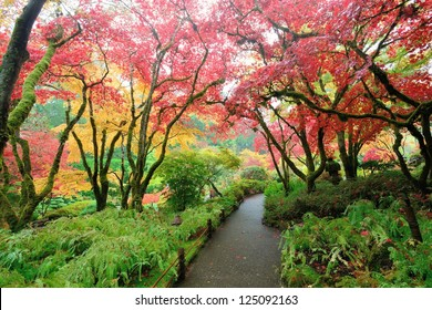 japanese maples in national historical site Butchart Gardens, Vancouver island, British Columbia, Canada