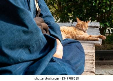 japanese monk cute cat