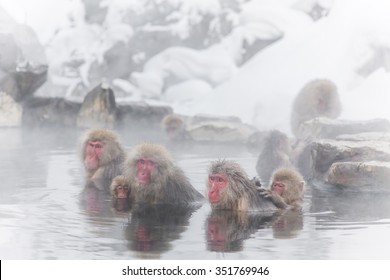 Japanese monkey enjoys an outdoor bath