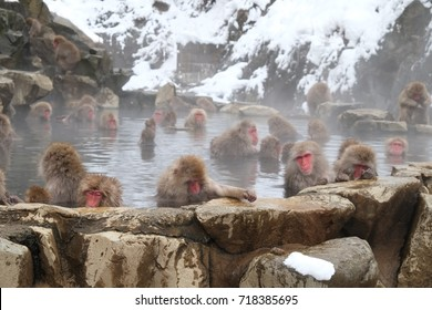 Japanese monkey in Nagano Prefecture Japan