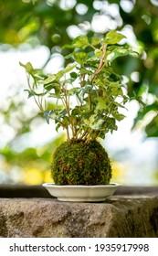 Japanese moss bonsai, zen mood image