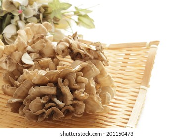 Japanese mushroom, Maitake edible mushroom