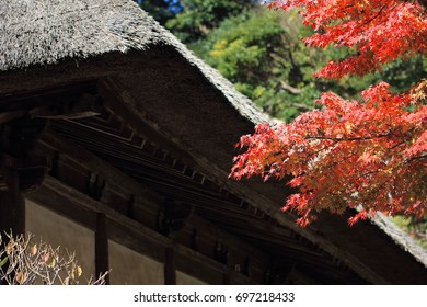 Japanese old house and autumn leaves