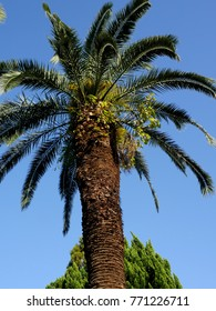 Japanese palm tree against blue sky
