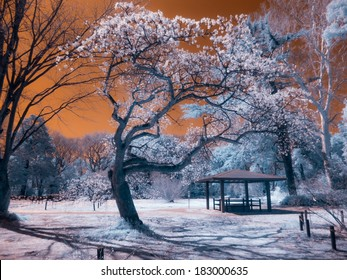 Japanese Park, Extended Infrared photograph.