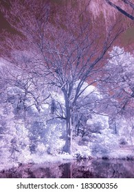 Japanese Park, Infrared photograph.