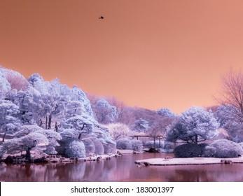Japanese Park. The Koishikawa Botanical Gardens. Infrared photo.