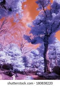 Japanese park, Tokyo. Extended Infrared shot.