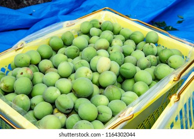 Japanese plum fruits