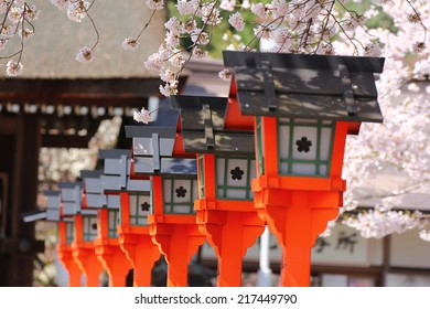 Japanese red lanterns in a park full of cherry blossoms background